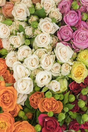 Bright multicolored bouquet of roses. Multicolored fresh roses background. Plenty of colorful bright roses close up. vertical photo.