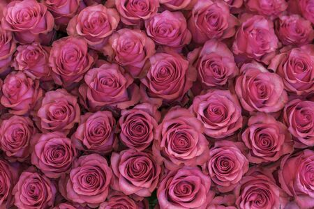 Background of pink and peach roses. Fresh pink roses. A huge bouquet of flowers. The best gift for women.