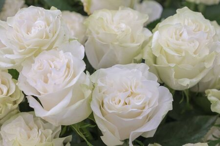 isolated close-up of a huge bouquet of white roses. White roses Flower Arrangement.