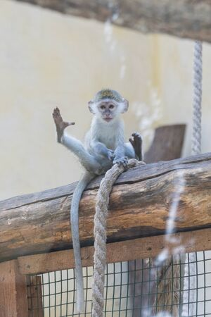 Adorable face of baby asian monkey. Young monkey sitting on an old log. vertical photo. Imagens