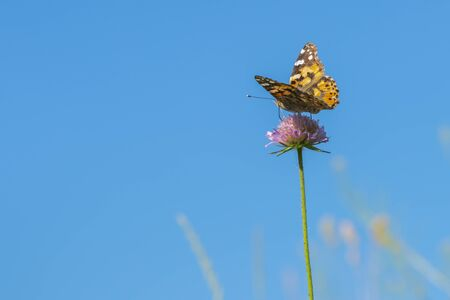 Butterfly on a purple flower against the blue sky.