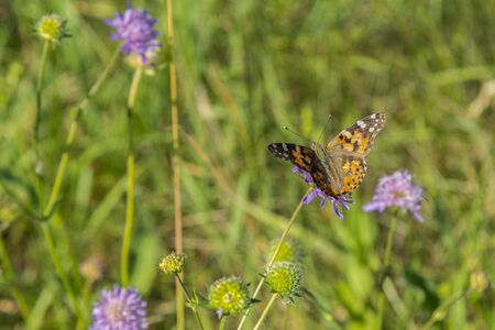 Butterfly on a flower in a field. Butterfly On Grass Field With Warm Light.