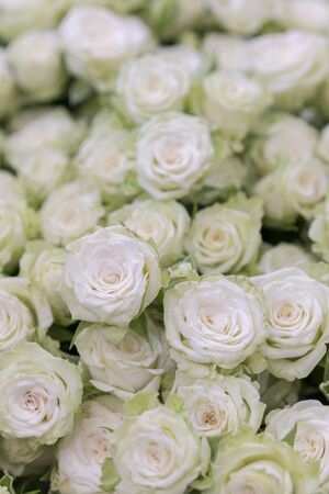 isolated close-up of a huge bouquet of white roses. Many white roses as a floral background. vertical photo.