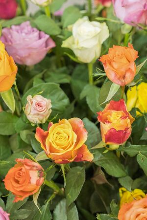 Bright multicolored bouquet of roses. Natural flowers background, soft focus. Colorful roses flower background, group of multicolor rose make from clay, handmade product. vertical photo. Stockfoto
