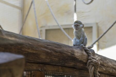Adorable face of baby asian monkey. Young monkey sitting on an old log. Animal care concept. Baby animals. The concept of animal welfare. Funny monkey.