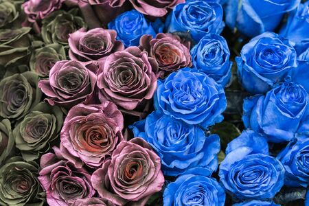 Bouquet of black, blue and burgundy roses.