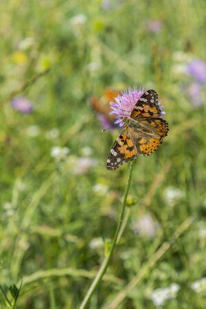 Butterfly on a flower in a field. Butterfly on flower. Butterfly On Grass Field With Warm Light. vertical photo. Banco de Imagens