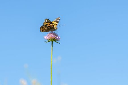 Butterfly on a purple flower against the blue sky. copy space