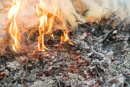 Burning leaves. Fire in the forest. Harmful smoke from burning leaves. Banco de Imagens