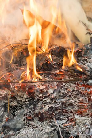 Burning leaves. Fire in the forest. Harmful smoke from burning leaves. vertical photo.