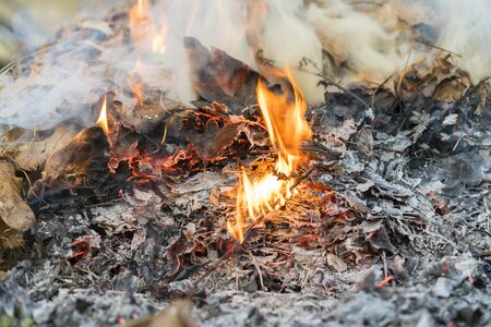 Burning leaves. Fire in the forest. Harmful smoke from burning leaves. Stock fotó