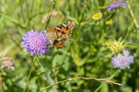 Butterfly on a purple flower on the field. close up. Stock fotó - 134656488