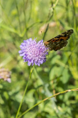 Butterfly on a purple flower on the field. close up. vertical photo. Stock fotó - 134656492