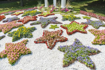 Stars of flowers. Flower bed in the form of a starry sky. Stock fotó