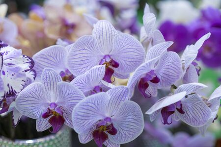 Purple orchid. Fresh flowers close-up. Stock fotó