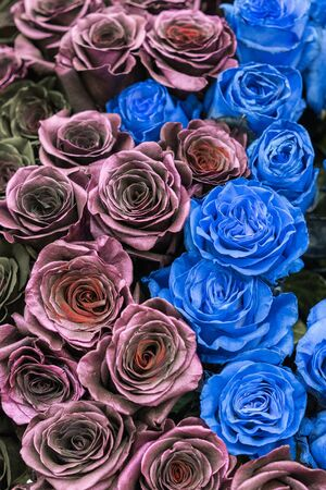 Bouquet of black, blue and burgundy roses. vertical photo.