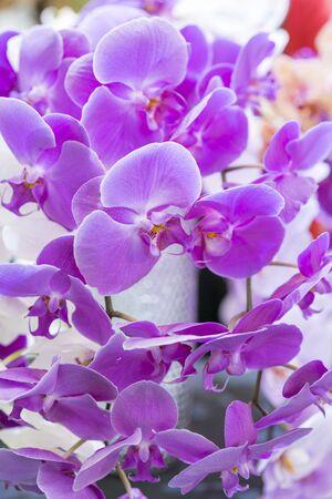 Purple orchid. Fresh flowers close-up. vertical photo. Stok Fotoğraf
