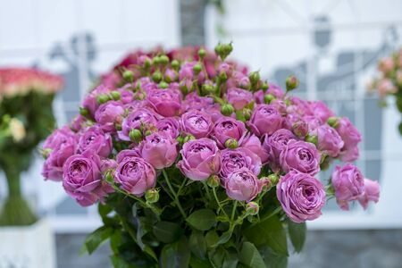 Fresh purple roses. Large, beautiful bouquet of purple roses. Stock fotó