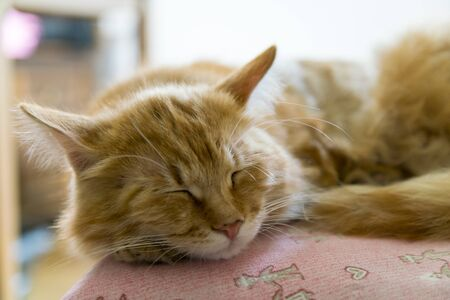 Sleeping red cat. Sleeping cat. bright red cat sweetly sleeping on the couch, the cat fell ill.