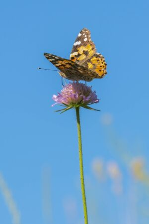 Butterfly on a purple flower against the blue sky. vertical photo. Фото со стока