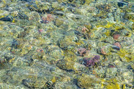 Coral reef. Clean sea. Sea vacation concept. Marine background.