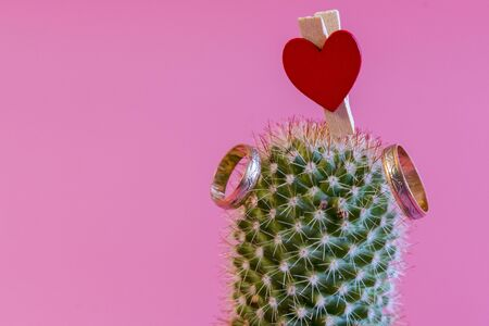 Two golden wedding rings on a cactus. Selected focus. Summer wedding concept. Romantic wedding ring on Love and marriage concept. copy space.