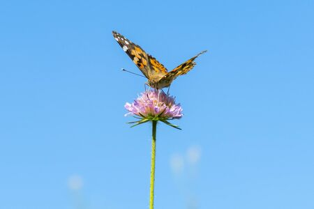 Butterfly on a purple flower against the blue sky. copy space. Stock fotó - 138062957