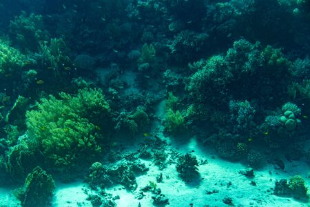 A thriving,healthy coral reef covered in hard corals, soft coral with abundant fish life. toned.
