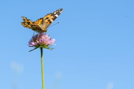 Butterfly on a purple flower against the blue sky. copy space. close up.