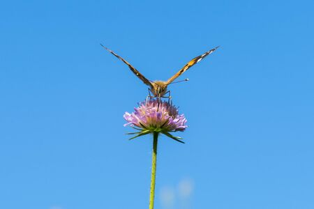 Butterfly on a purple flower against the blue sky. copy space.