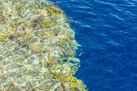 Coral reef. Clean sea. Sea vacation concept. Marine background. Stock fotó