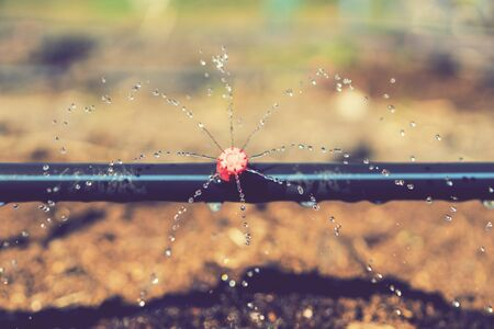 Sprinkler systems, drip irrigation, watering lawns. Drip Irrigation System Close Up. Water saving drip irrigation system being used in a organic onions field. toned.