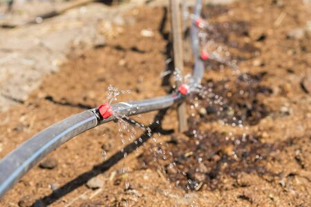 Sprinkler systems, drip irrigation, watering lawns. Drip Irrigation System Close Up. Water saving drip irrigation system being used in a organic onions field.