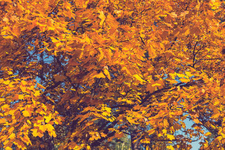 Collection of Beautiful Colorful Autumn Leaves, green, yellow, orange, red. Autumn yellow leaves background in sunny day Seamless tree bark background. Brown tileable texture of the old tree. toned