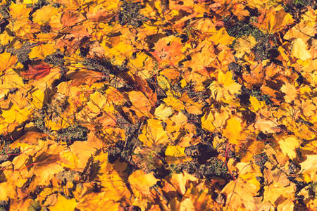 Background of colorful autumn leaves on forest floor Seamless tree bark background. Brown tileable texture of the old tree. Squirrel runs through the forest macro. toned Фото со стока