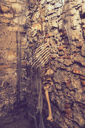 Human skeleton hanging in a dungeon. Tortured man hanged at the end. toned 免版税图像 - 164346925