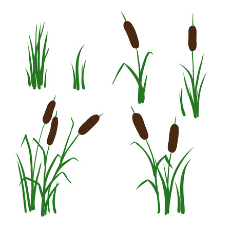 simple vector  reed mace four types Illustration