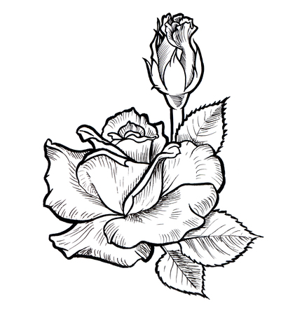 Flower sketch draw black ink line style rose