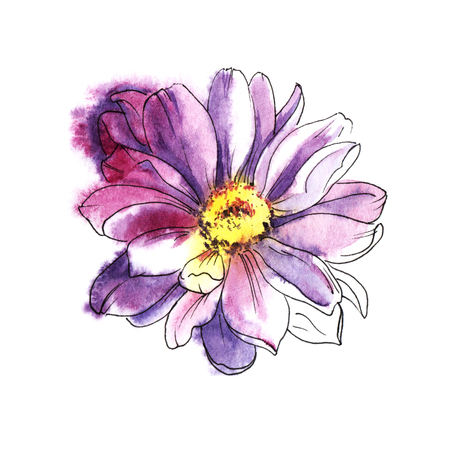 Chrysanthemum. Colored hand drawn watercolor illustration. Isolated on white background.