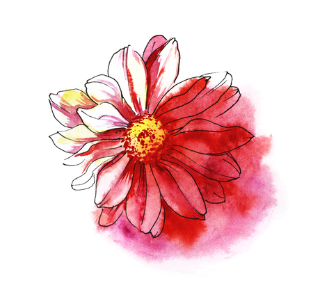 Red chrysanthemum. Colored hand drawn watercolor illustration. Isolated on white background. Banque d'images
