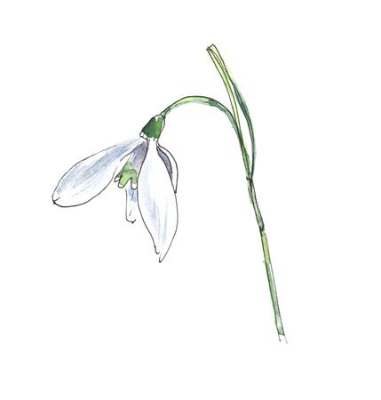 Bucaneve. Piccolo fiore bianco. Illustrazione dell'acquerello disegnato a mano su una carta ruvida. Isolare su uno sfondo bianco.