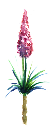 The lush cone-shaped pink inflorescence grows from the yucca shrub palm. Hand-drawn watercolor sketch illustration