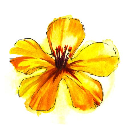 Colorful yellow gradient flower head with five petals and orange stamen isolated on white background. Watercolor hand drawn painting. Brush stroke floral illustration with paper texture. Top view.