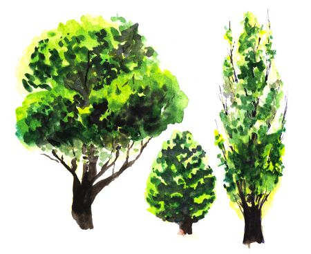Set of abstract bright green lush plants , bush, coniferous and deciduous, with dark brown trunks. Isolated natural elements on white background. Watercolor hand drawn illustration on paper texture. Imagens