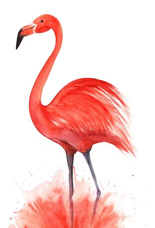 Red pink flamingo. Standing on lilac legs in a pink cloud of spray. Black beak eye dot. Hand drawn decorative watercolor illustration. Isolated on a white background.