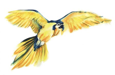 The yellow parrot Ara flies spreading its wide wings. Yellow with a blue parrot. The big parrot. Watercolor illustration of a tropical bird. Hand drawn illustration.