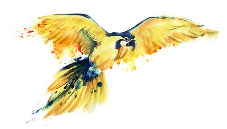The yellow parrot Ara flies spreading its wide wings. Yellow with a blue parrot. Big parrot. Art watercolor illustration of a tropical bird. Paint splashes on feathers. Hand drawn illustration