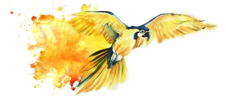 yellow parrot Ara flies spreading its wide wings. Yellow with a blue parrot. Big parrot. Artistic watercolor illustration of tropical bird. Watercolor stain. Space for text. Hand drawn illustration.
