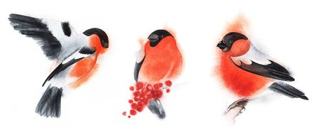 Set of three decorative elements. Bullfinch on fly. Birds fly and sit. Red winter fluffy bird. Christmas card. Hand drawn watercolor illustration on white background