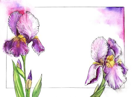 Watercolor floral frame for text with tender irises on sides. White background with thin black frame. Beautiful elegant flowers of purple shades with yellow cores and delicate lilac glowing around